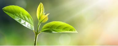 Protections des plantes