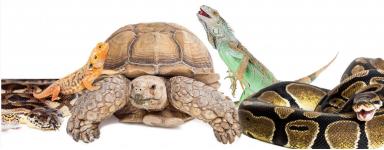 Reptiles et NAC